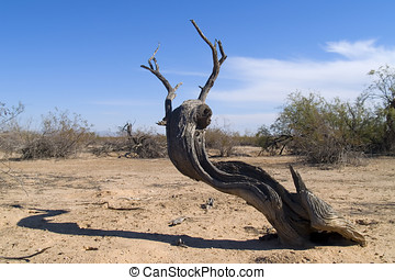 Dead Wood - The remains of a decaying Mesquite tree that...