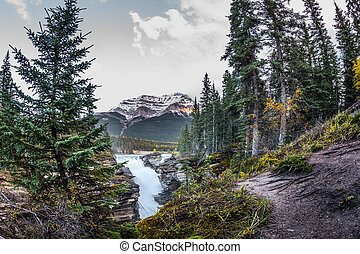 The Athabasca among the forest - The bubbling waterfall of...