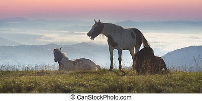 horses in the foggy Carpathians - Over the village...