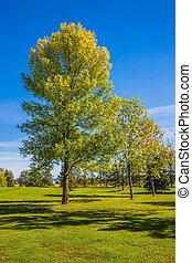 Grass golf course - The concept of Golf tourism. Golf Club...
