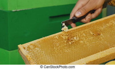Closeup of beekeeper man clean wooden honey frame working in the apiary on summer day