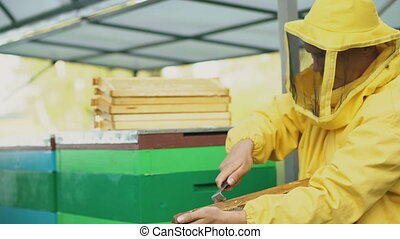 Steadicam shot of beekeeper man clean wooden honey frame working in the apiary on summer day