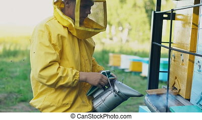 Stedicam shot of Young beekeeper man smoking bees away from...