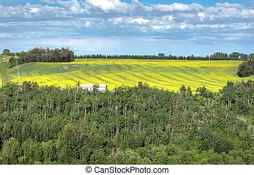 Flowering canola field framed with forest