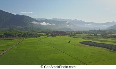 Aerial View Boundless Rice Fields among Plants against Hills...
