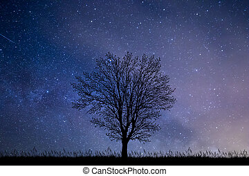Tree at night with starry sky