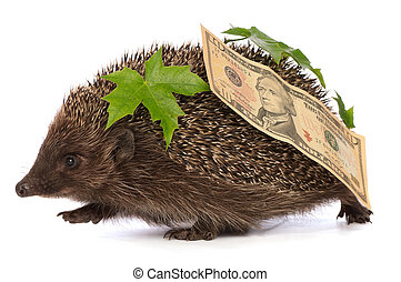 hedgehog with dollars profit - The hedgehog in motion...