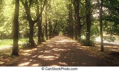 POV cyclist's shot of a park alley on a sunny summer day -...