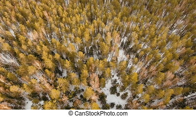 Winter landscape with forest. - Aerial view of a winter...