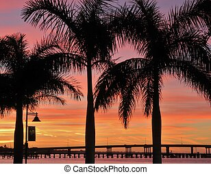 Palm trees and a beautiful, goldent sunset