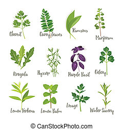 Set of herbs 2  isolated, illustration