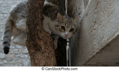 The domestic cat climbed the tree in the town. Its fur is...