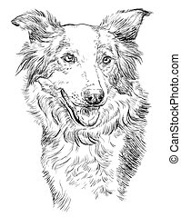 Vector Border collie - Border collie vector isolated hand...