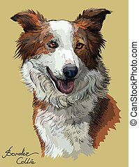 Border collie red color - Border collie vector hand drawing...