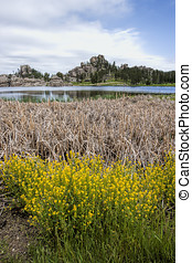 Plants by Sylvan Lake. - Dry grass and plants in the...