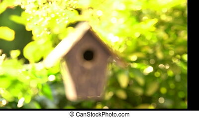 Bird house hanging in a tree in a garden during summer - 4K...