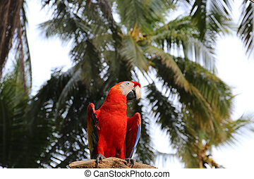 Red Macaw Bird on branch