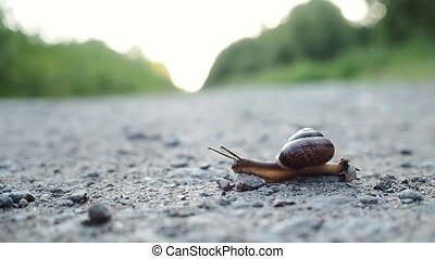 Snail crawling on the road. From right to left. It's moving...