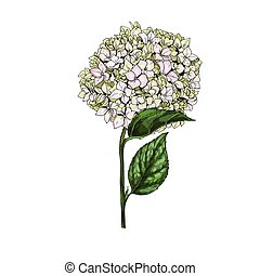 Hand drawn Eustoma phlox flowers and leaves isolated on...