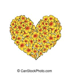 Heart of yellow phlox flowers isolated on white background....