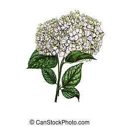 Hand drawn bouquet of phlox flowers isolated on white...