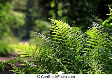 Bunch of ferns brightly lit against dark fuzzy background in...