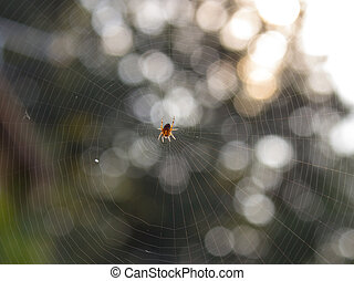 Spider in his home network at sunrise (4) - Spider in his...