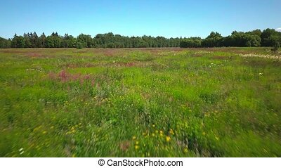 Low flight over blooming meadow with field herbs at summer...