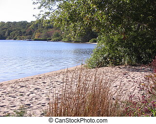Beach on Cape Cod pond