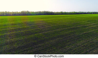 Flight over a field with green grass