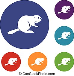 Canadian beaver icons set in flat circle red, blue and green...
