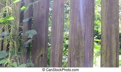 View through wooden fence. Paling, picket fence and nettle.