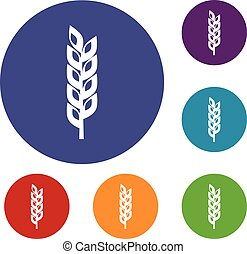 Grain spike icons set in flat circle red, blue and green...