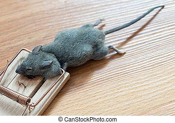 mousetrap - Dead mouse in a mousetrap