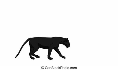 Black Panther Walking - Black panther walking on a white...