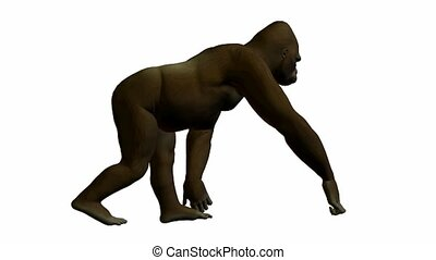 Gorilla Walking - Gorilla walking on a white background