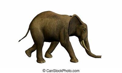 Elephant Walking - Elephant walking on a white background