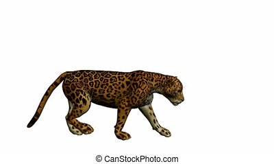 Jaguar Walking - Jaguar walking on a white background