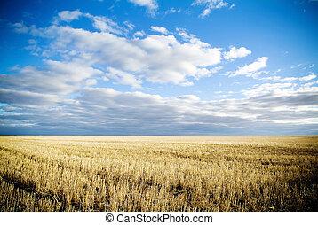 Austrália, trigo, campos, após, colheita,  rural