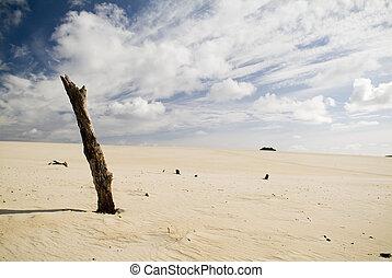 Large coastal sand dunes