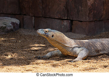 FUENGIROLA, ANDALUCIA/SPAIN - JULY 4 : Komodo Dragon...