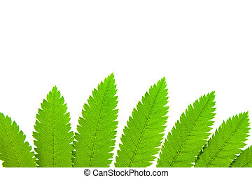 green plant - Photo of green plant isolated on white...