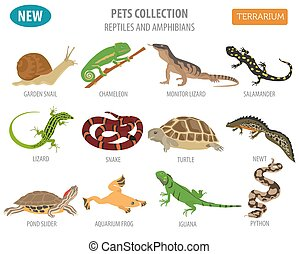 Pet reptiles and amphibians icon set flat style isolated on...