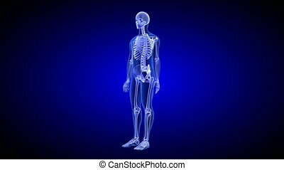Blue Human Anatomy Body 3D Scan render - rotating seamless...
