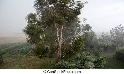 The force of a tornado - Trees sway under the force of a...