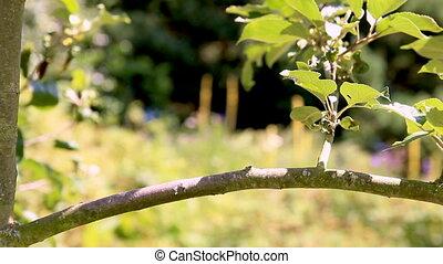 Redstart Bird on a Branch