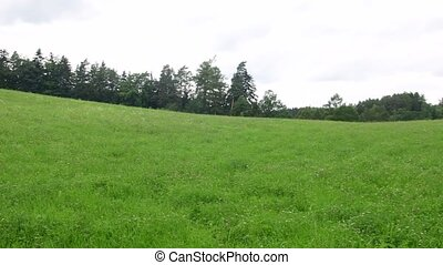 Pan view of summer landscape. Green meadow in summer