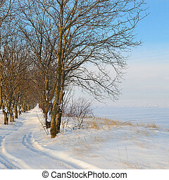 snow-covered field and blue sky - snow-covered field and...