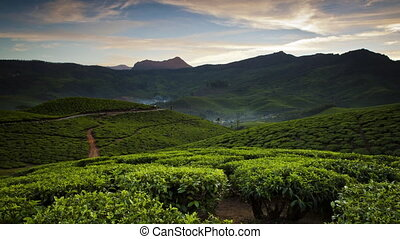 A day's timelapse over a tea plantation among the mountains in India. Andreev.