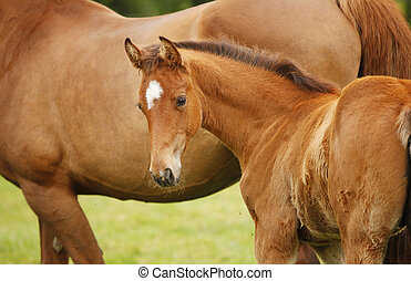 Foal stands with mother